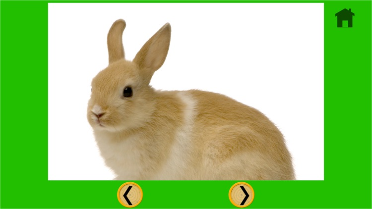rabbits for good kids - free game screenshot-3