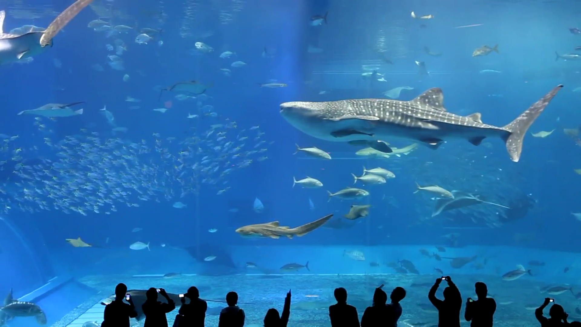 Real Aquariums HD screenshot 5