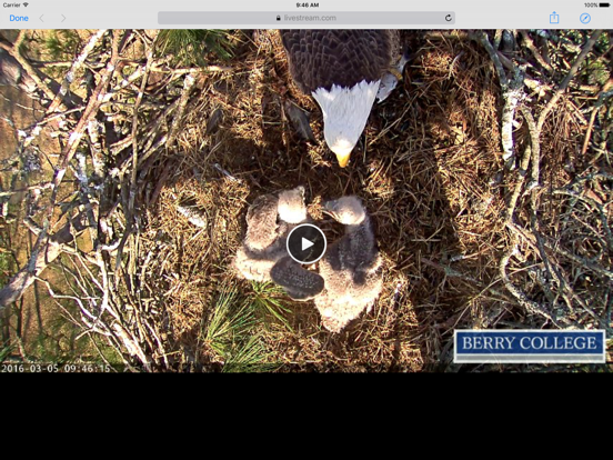 Berry College Eagle Cameras-ipad-2