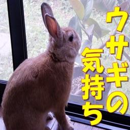 ウサギの気持ち クイズ