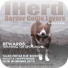 iHerd: Border Collie Lovers Magazine