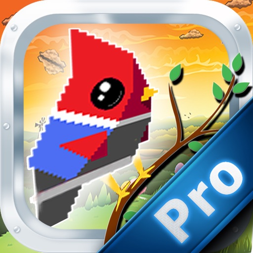 Bird Coin Racing PRO