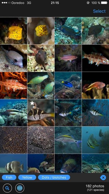 WhatFish, Identification Guide
