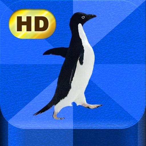 Meme Pics HD