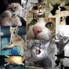 Funny Cat Emoticon icon