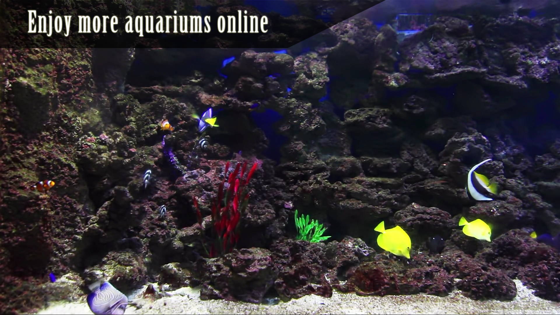 Peaceful Aquarium HD screenshot 14