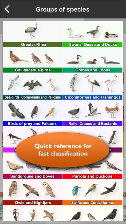 Birds of Europe - identification, distribution, voices screenshot-3