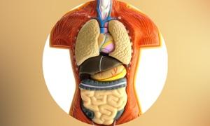 Human Body Details