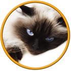 gatos prodigiosos para crianças - sem anúncios icon