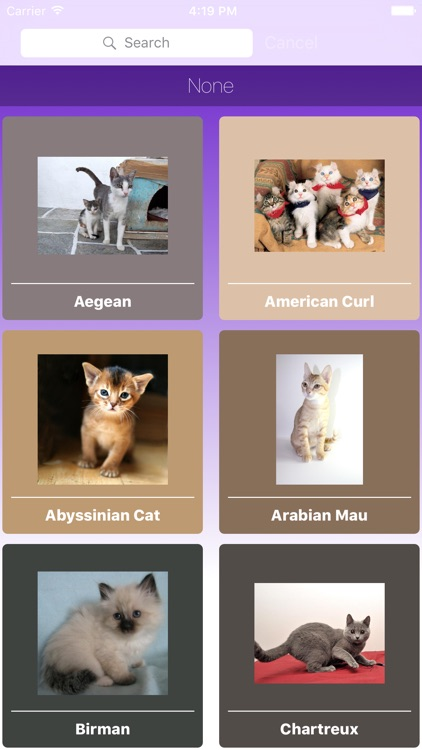 Encyclopaedia of Kittens by Breed - with Cute Pics