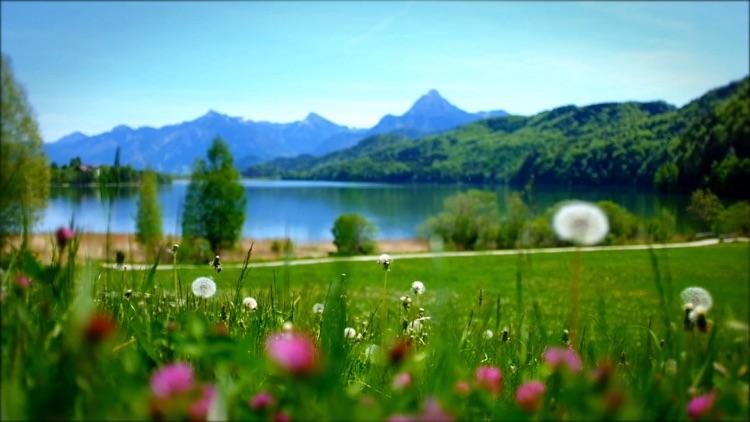 Relaxing Flowers & Meadows Premium - Relaxing Ambients