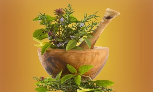 Medicinal Plants Zone