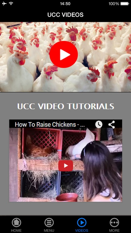 Raising Chickens Made Easy for Beginners