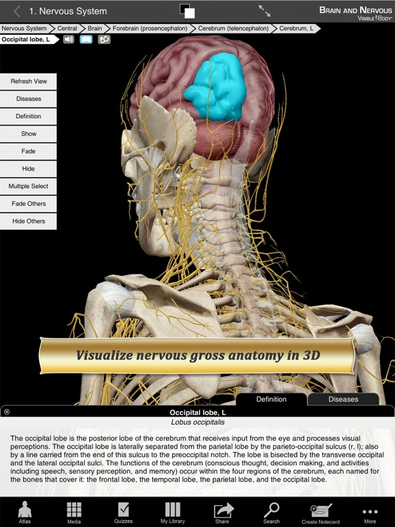 Brain And Nervous Anatomy Atlas Essential Reference For Students