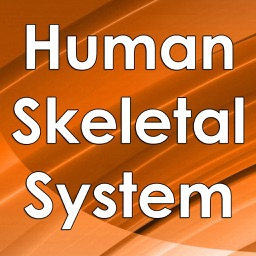 Human Skeletal System 4000 Flashcards Q&A