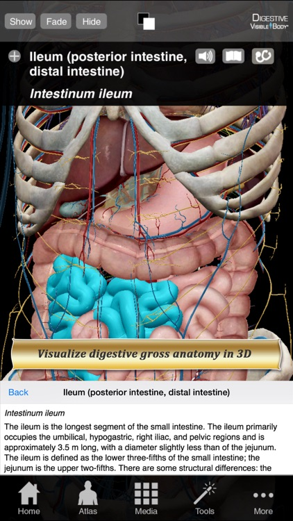 Digestive Anatomy Atlas: Essential Reference for Students and Healthcare Professionals screenshot-0