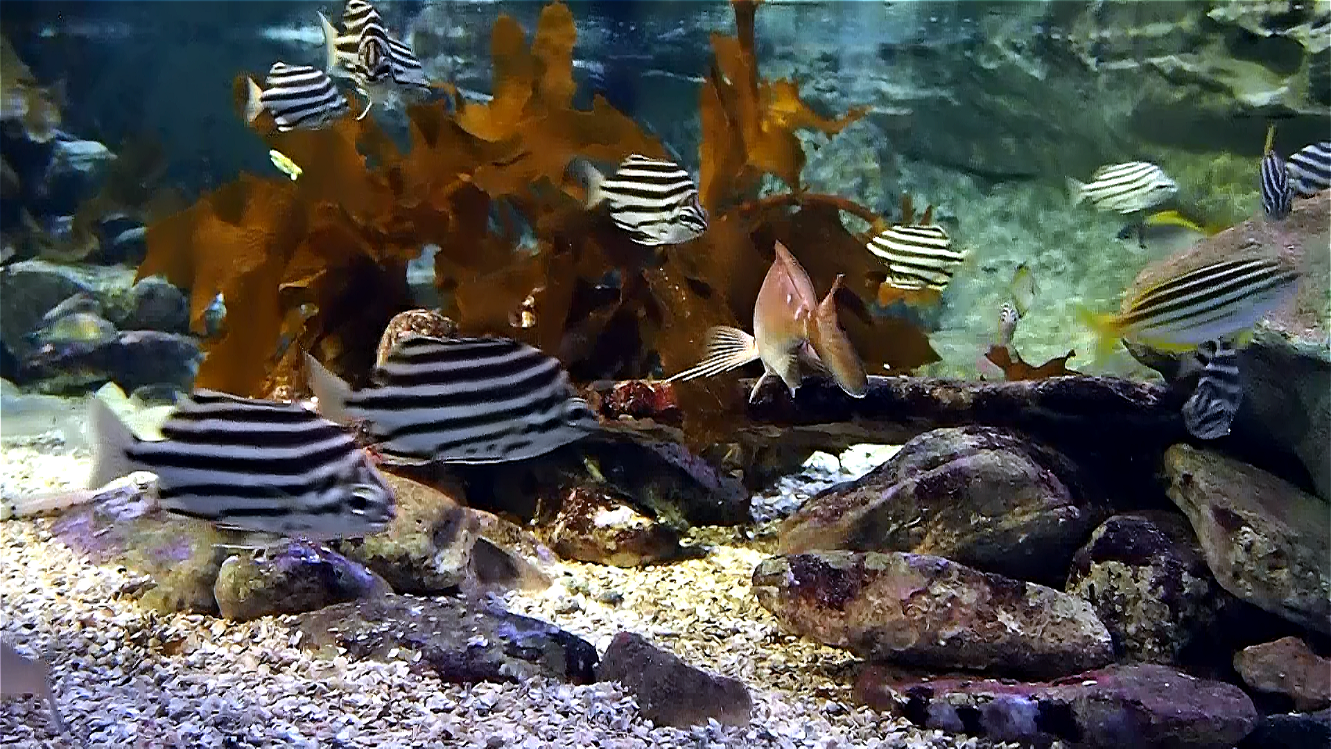 Aquarium live HD TV: Coral reef scenes with relaxing nature & ocean sounds for stress relief screenshot 4