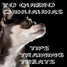Yo Quiero Chihuahua!