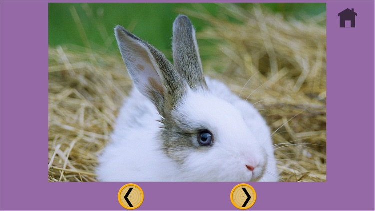 prodigious rabbits for kids - no ads screenshot-4