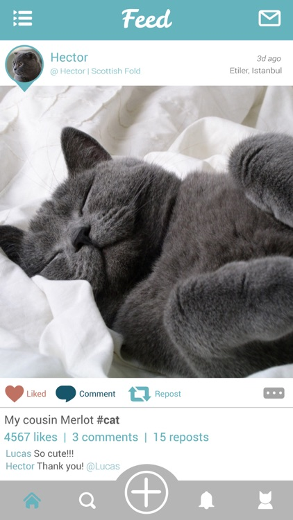 Moofio - Pet social network for cats, dogs and all other animals