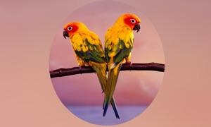 Parrots Encyclopedia Pro