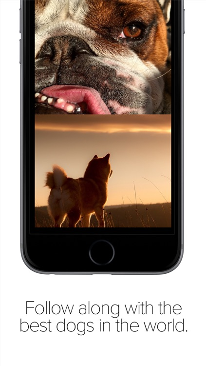 Pack Dog - Post your dog photos and meet dog owners by breed and city screenshot-2