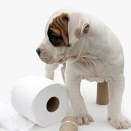Dog Potty Training Guide