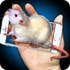 Mouse Hand Funny Joke