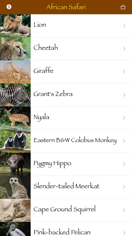African Safari screenshot-1