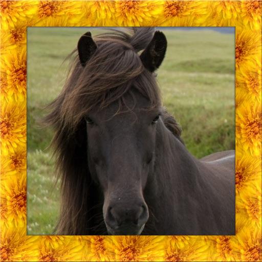 Pony Simulator 3D