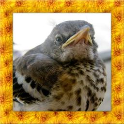 Mocking Bird Simulator
