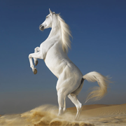Horse Breeds Collection