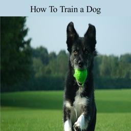 Train a Dog