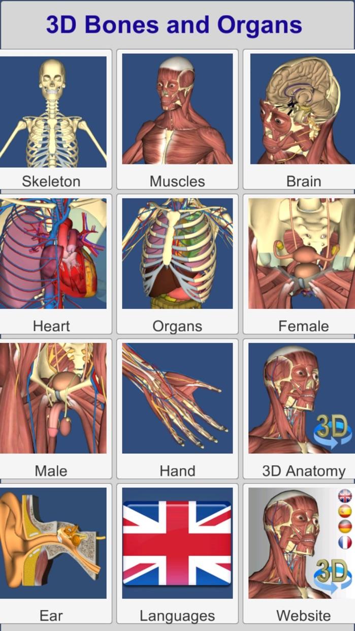 3D Bones and Organs (Anatomy) Screenshot