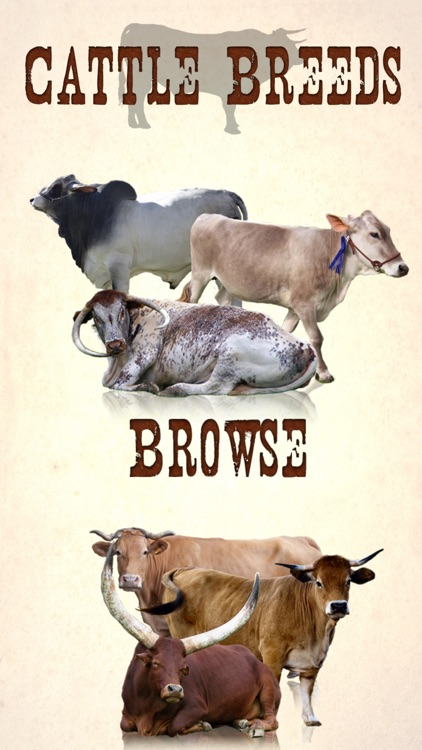 Cattle Breeds: Various Types of Cattle screenshot-0