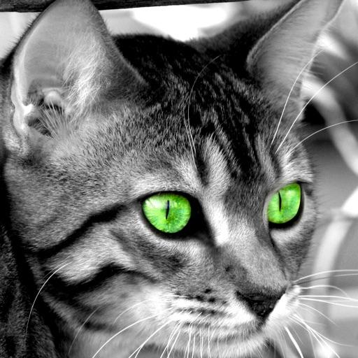 Cats: Beautiful and Amazing