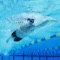 How To Swim is the Complete video guide for you to learn swimming