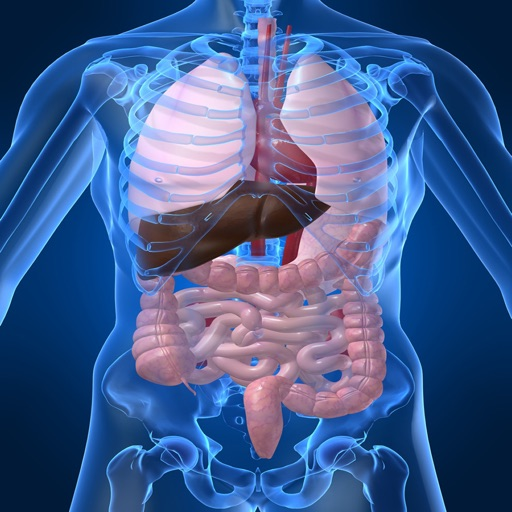 Human Biology : Digestive System Quiz