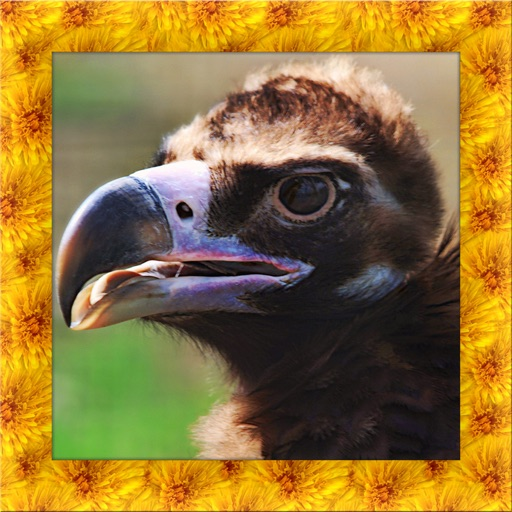 Vulture Simulator 3D