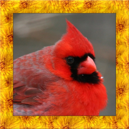 Cardinal Simulator 3D