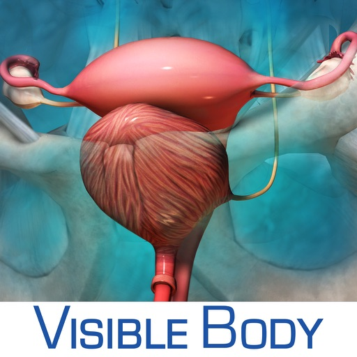 Reproductive and Urinary Anatomy Atlas: Essential Reference for Students and Healthcare Professionals