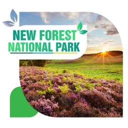 New Forest National Park Travel Guide