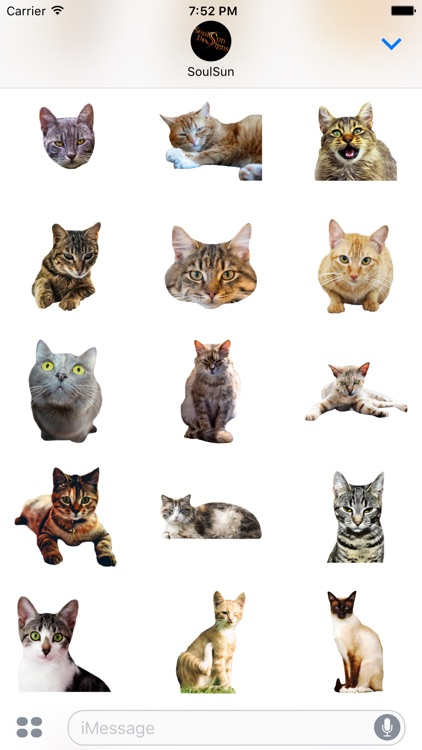 Cute Kitty Cats screenshot-3