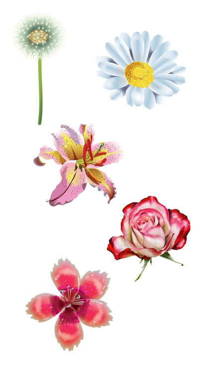Roses and Flowers - Flower Art - Love, Friendship