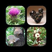 Plants & Minerals Bundle