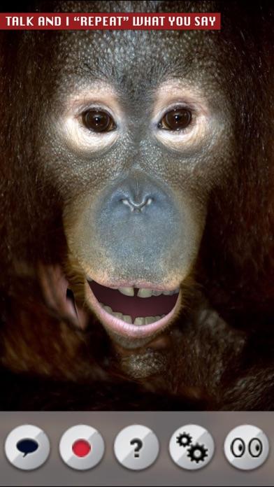 Talking Orangutan screenshot one