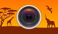 Animal Cameras
