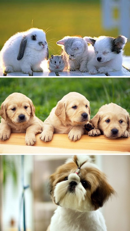 Cute Baby Pet Pictures, Puppy & Animals Wallpapers screenshot-3