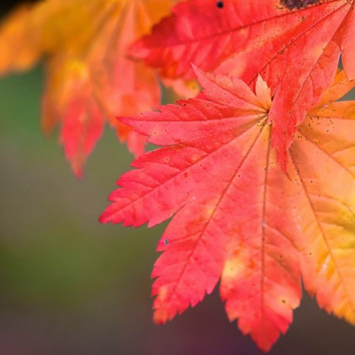 Seasonal Wallpapers HD, Beautiful Seasons Pictures