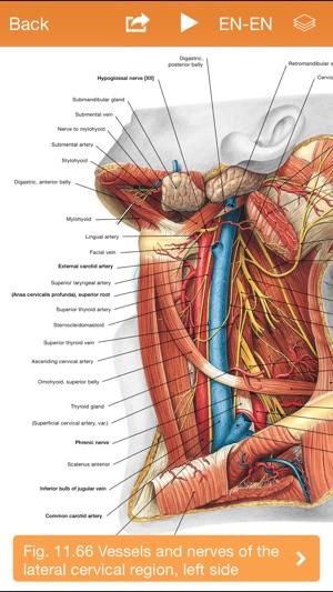 Sobotta Anatomy Atlas On The App Store